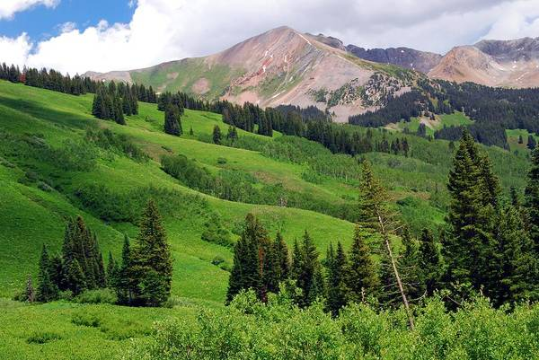 Painting - Lush Green Of A Colorado Summer by Cascade Colors