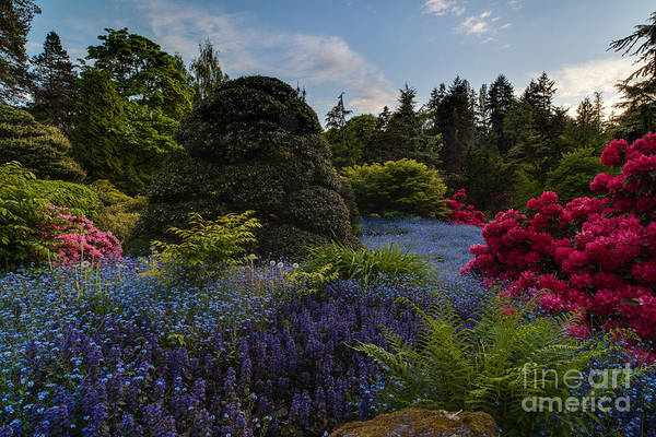 Koi Photograph - Lush Kubota Spring Landscape by Mike Reid