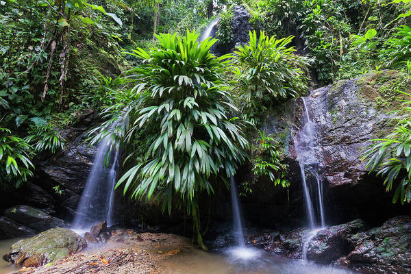 Caribbean Photograph - Lush Rainforest And Falls by Debralee Wiseberg