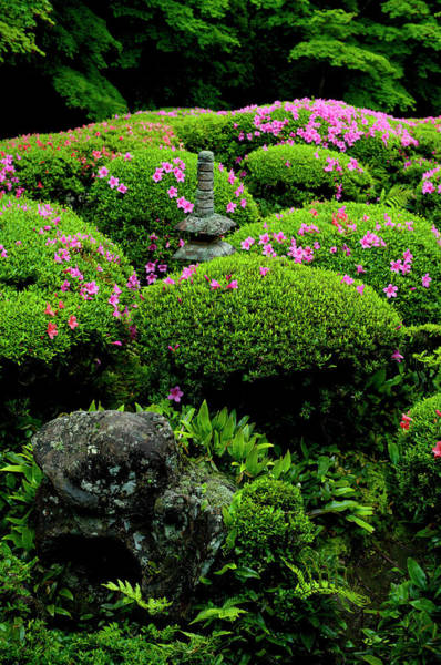 Japanese Culture Photograph - Lush Vegetation And Blooming by Damien Douxchamps