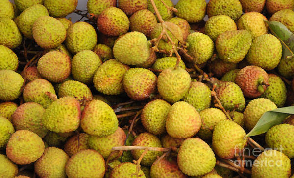 Pinyin Photograph - Lychees by Josephine Cohn