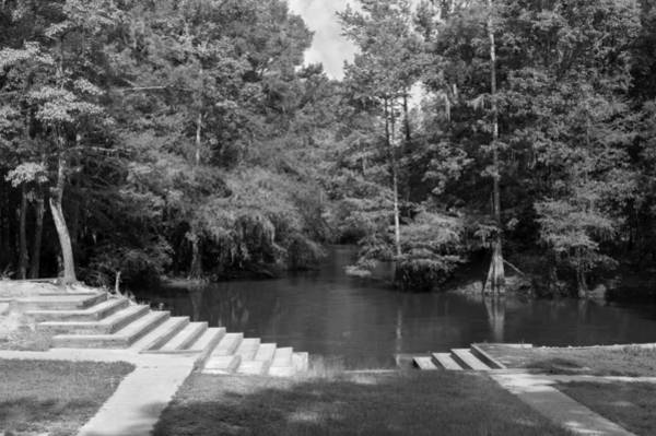 Photograph - Lynches River County Park Greyscale by MM Anderson