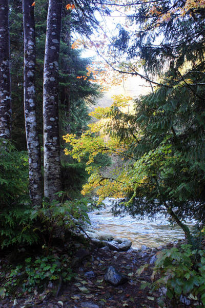 Photograph - Lynn Creek 1 by Gerry Bates