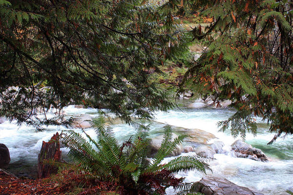 Photograph - Lynn Creek 2 by Gerry Bates