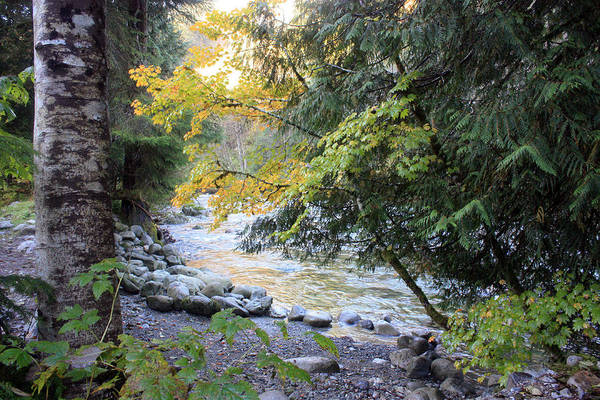 Photograph - Lynn Creek 3 by Gerry Bates
