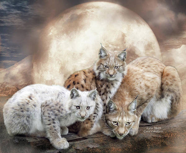 White Cat Mixed Media - Lynx Moon by Carol Cavalaris