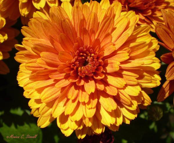 M Bright Orange Flowers Collection No. Bof5 Art Print