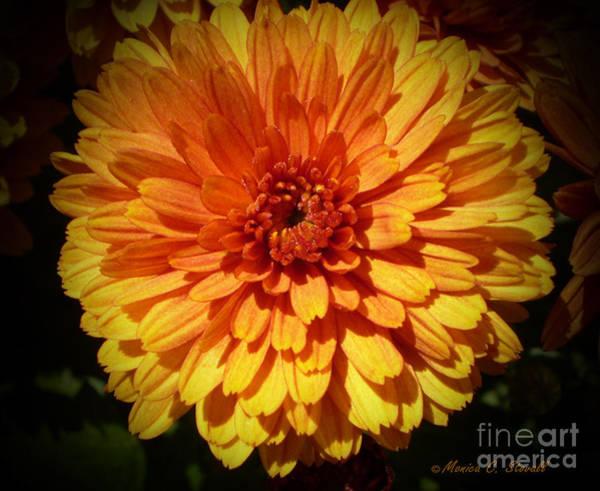 M Bright Orange Flowers Collection No. Bof8 Art Print