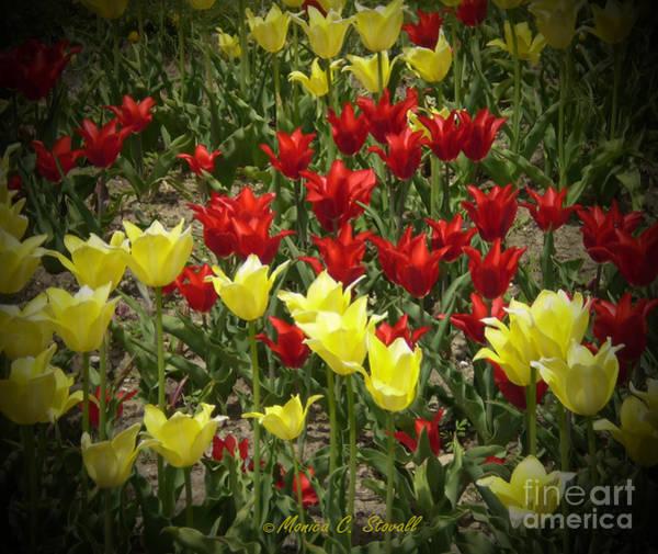 M Color Combination Flowers Collection No. Cc2 Art Print
