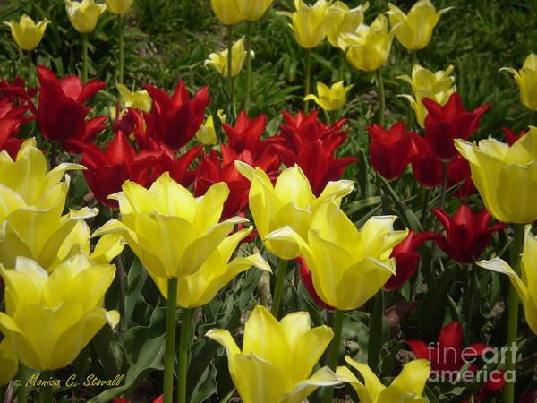 M Color Combination Flowers Collection No. Cc6 Art Print