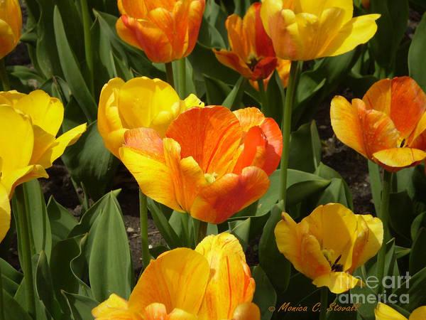 M Color Combination Flowers Collection No. Cc7 Art Print