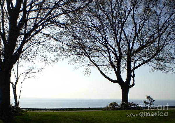 Photograph - M Landscapes Collection No. L27 by Monica C Stovall