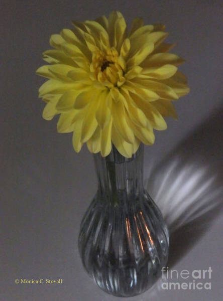 Photograph - M Still Life Collection Yellow Flower Clear Vase No. Slc10 by Monica C Stovall