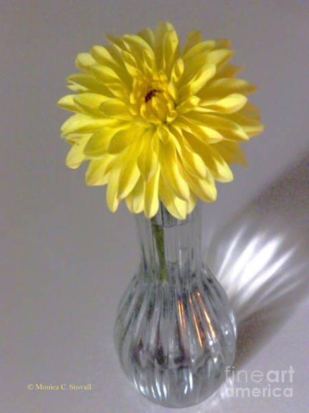 Photograph - M Still Life Collection Yellow Flower Clear Vase No. Slc12 by Monica C Stovall