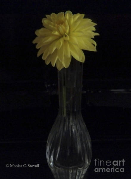 Photograph - M Still Life Collection Yellow Flower Clear Vase No. Slc14 Dark Background by Monica C Stovall