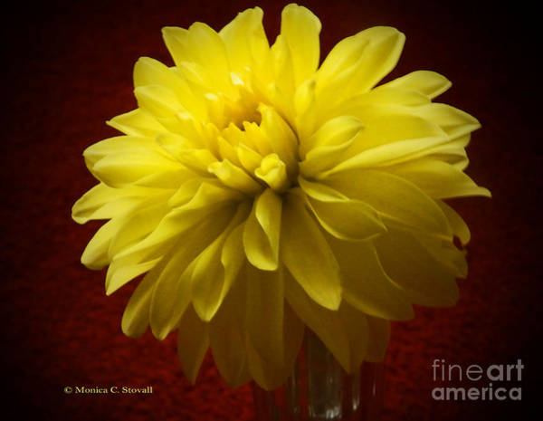 Photograph - M Still Life Collection Yellow Flower Clear Vase Red Vignette No. Slc18 by Monica C Stovall