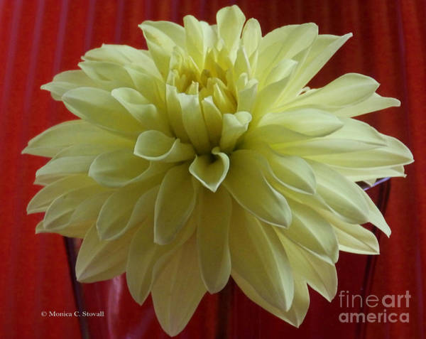 Photograph - M Still Life Collection Yellow Flower Red Wine Vase No. Sl25 by Monica C Stovall