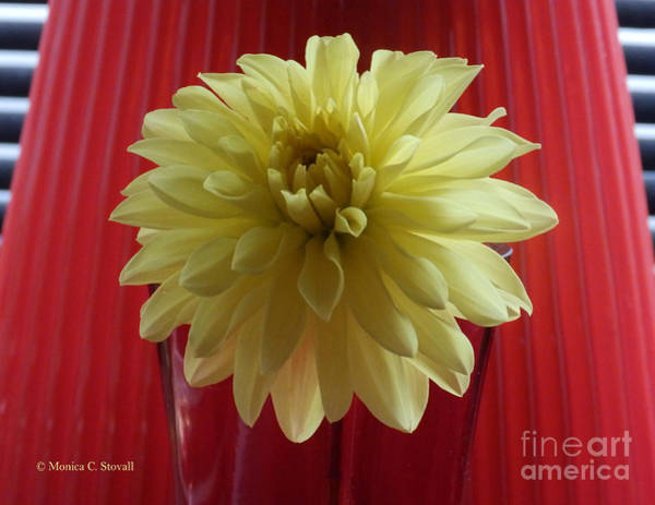 Photograph - M Still Life Collection Yellow Flower Red Wine Vase No. Slc20 by Monica C Stovall
