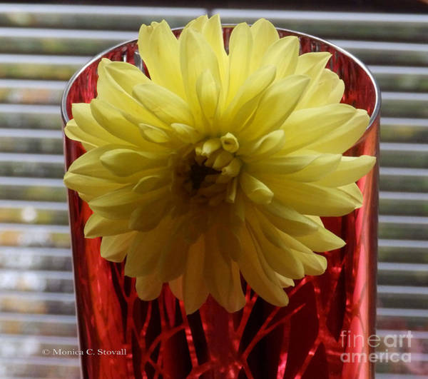 Photograph - M Still Life Collection Yellow Flower Stripes Red Vase No. Scl22 by Monica C Stovall