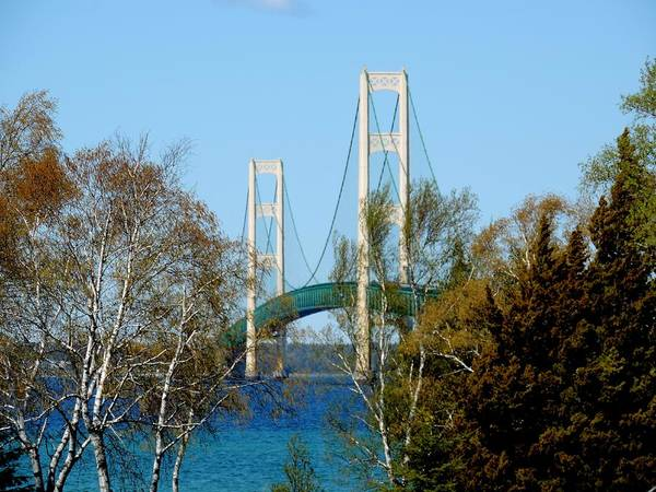 Photograph - Mackinac Bridge Birches by Keith Stokes