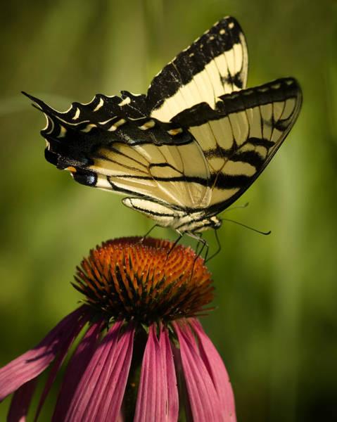 Wall Art - Photograph - Macro Butterfly by Jack Zulli