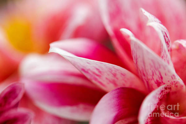 Macro Image Of A Pink Flower Art Print