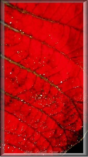 Photograph - Macro Red Poinsettia Leaf by Danielle  Parent