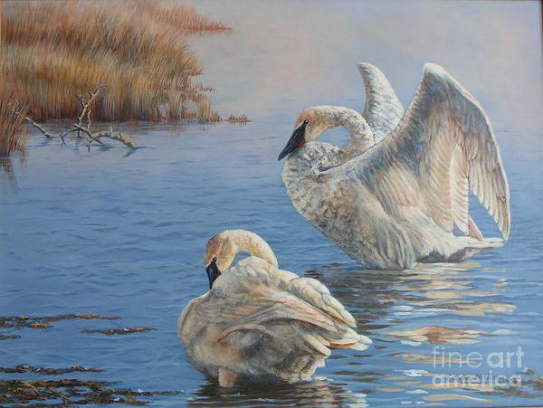 Trumpeter Swan Painting - Madison River Trumpeters by Sandra Williams