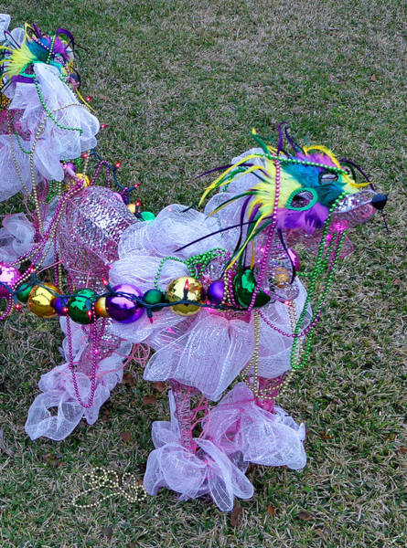 Photograph - Mardi Gras Poodle At Starfish Cafe by Kathy K McClellan