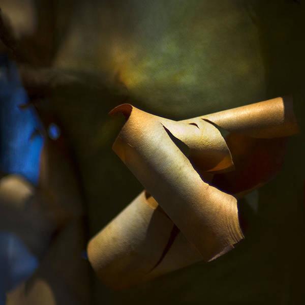 Photograph - Madrona Tree Bark by Yulia Kazansky