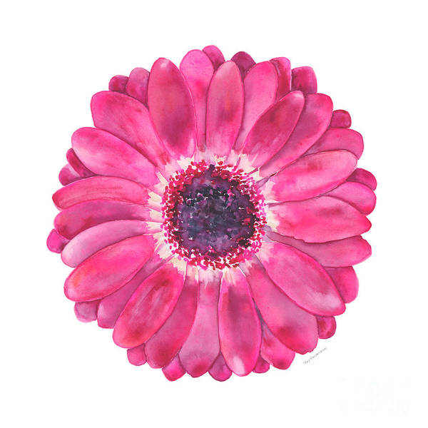 Wall Art - Painting - Magenta Gerbera Daisy by Amy Kirkpatrick