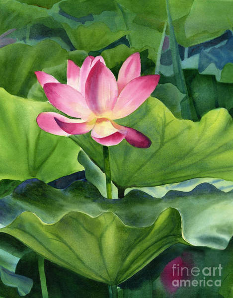 Waterlily Painting - Magenta Lotus Blossom by Sharon Freeman