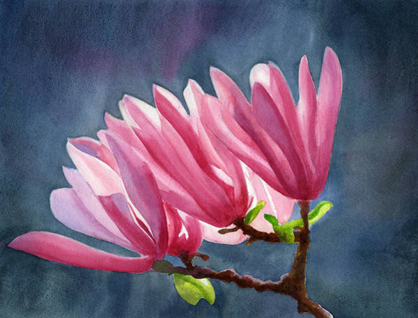 Violet Painting - Magenta Magnolias With Dark Background by Sharon Freeman