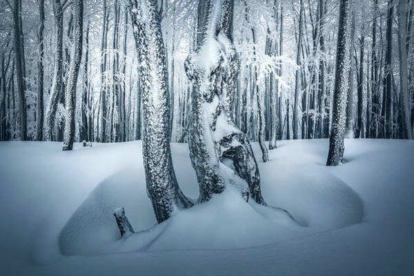 Slovakia Photograph - Magic Forest by Peter Kov??ik
