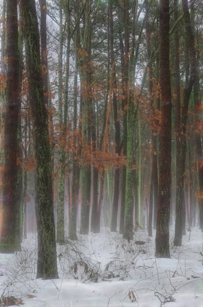 Photograph - Magic In The Fog 1 by Beth Sawickie