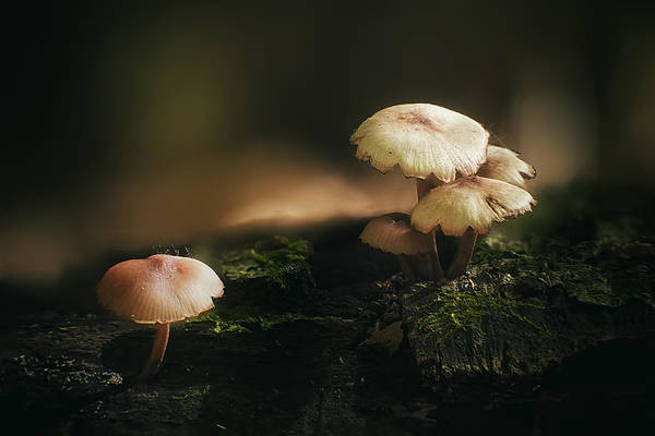 Wall Art - Photograph - Magic Mushrooms by Scott Norris
