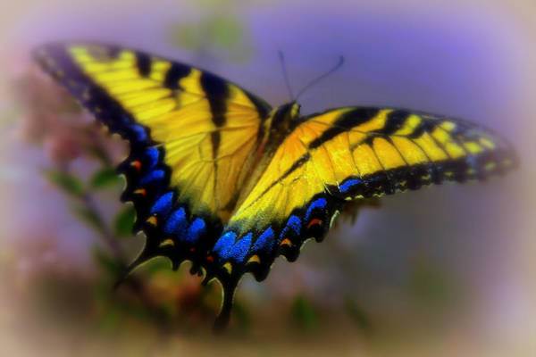 Photograph - Magic Of Flight by Karen Wiles