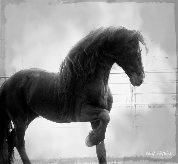 Photograph - Magic Stride by Carol Whitaker
