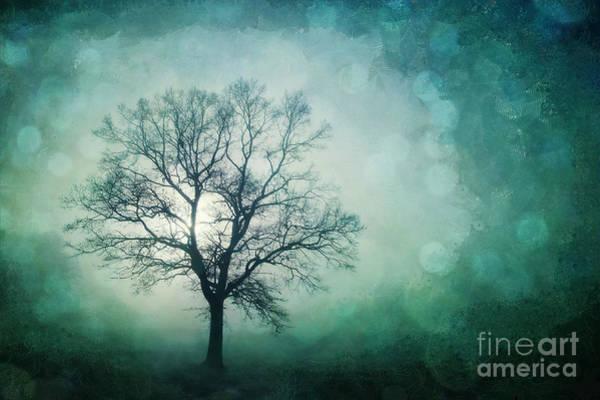 Single Tree Wall Art - Photograph - Magic Tree by Priska Wettstein