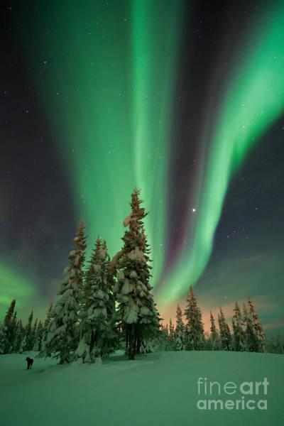 Aurore Photograph - Magic Winter Night by Priska Wettstein