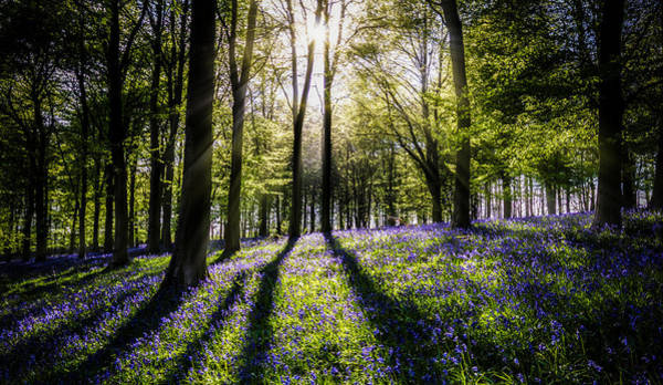 Bluebell Photograph - Magic Wood by Ian Hufton