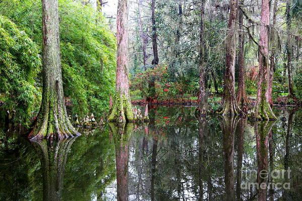 Photograph - Magical Cypress Swamp by Carol Groenen