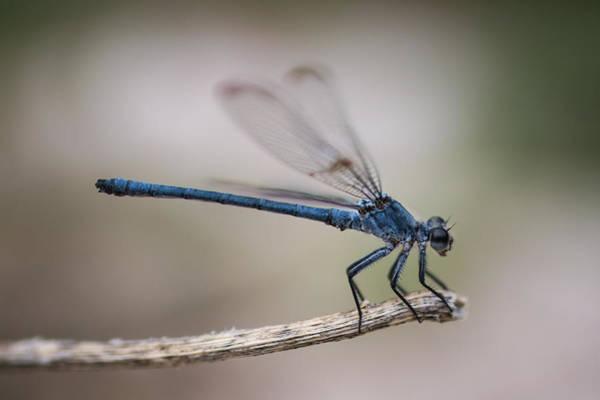Wall Art - Photograph - Magical Dragonfly   by Ran Yehezkel