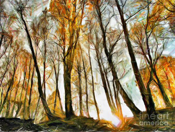 Drawing - Magical Forest - Drawing by Daliana Pacuraru