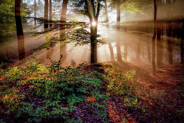 Sunrays Photograph - Magical Forest by Peter Bijsterveld
