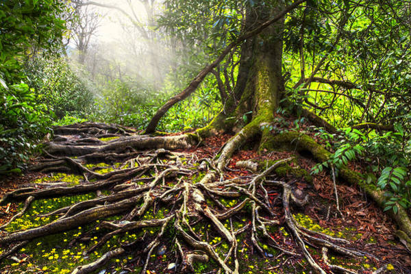 Photograph - Magical Light On The Appalachian Trail by Debra and Dave Vanderlaan