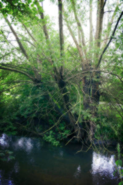 Photograph - Magical Tree In Forest by Doc Braham