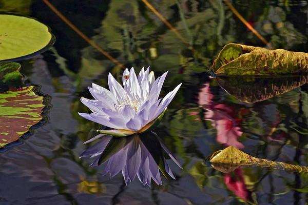 Photograph - Magical Waterlily World by Byron Varvarigos