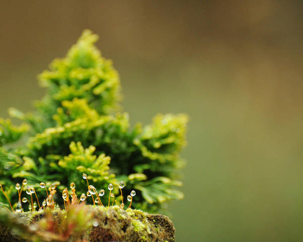Chartreuse Photograph - Magical World Of Green And Gold by Rebecca Sherman