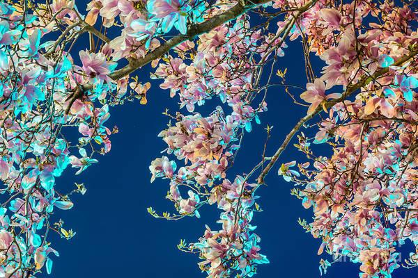 Flowering Trees Digital Art - Magnolia-greenlight by Susan Cole Kelly Impressions